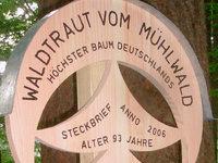 Freiburger Douglasie ist der höchste Baum im Land