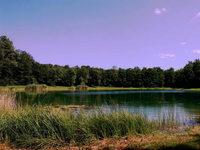 Sasbacher See