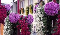 Exklusives VIP-Event auf der Chrysanthema für BZCard-Inhaber