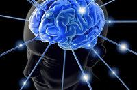 Dem Geheimnis des Gehirns auf der Spur