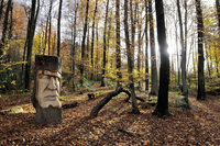 """Bilder des Tages: """"Waldmenschen"""""""