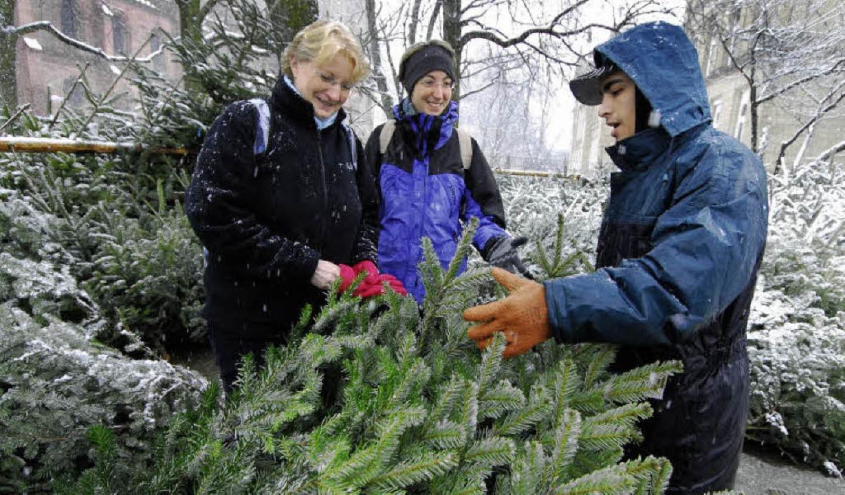 Oh billigbaum oh biobaum freiburg badische zeitung - Obi weihnachtsbaumverkauf ...