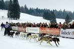 Schlittenhunderennen in Bernau