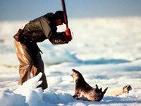 Kanada verteidigt Robbenjagd