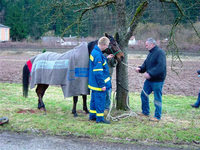 Entlaufenes Pferd hält Polizei und THW Biberach auf Trapp