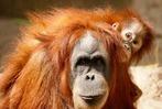 Süße Tierbabys: Nachwuchs im Zoo