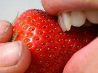 Folie macht's möglich: Erste Erdbeeren am Kaiserstuhl