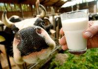 Minister:Weniger Milch produzieren