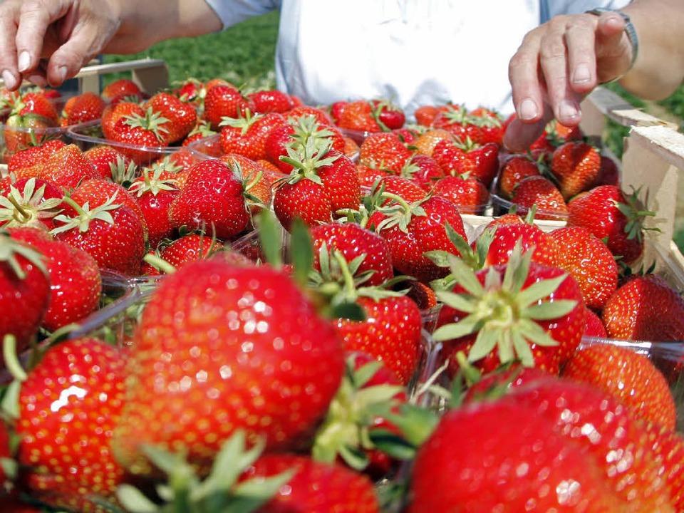 Die Erdbeersaison wird immer länger, damit sich der Anbau lohnt.  | Foto: dpa