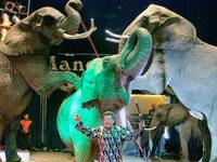 Afrikas Big Circus in Südbaden: ein wanderndes Problem