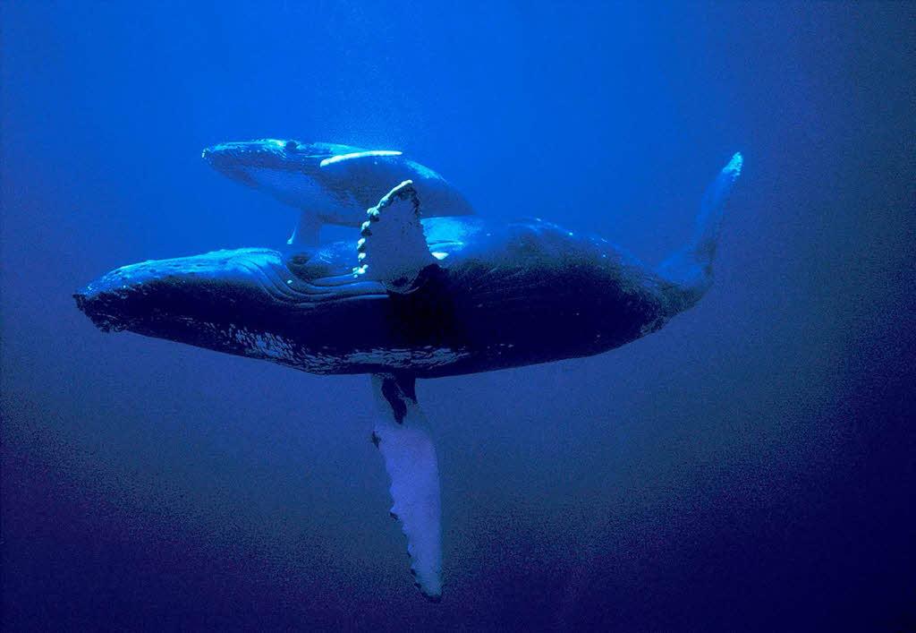 Wale: Die Könige der Meere - Neues für Kinder - Badische ...