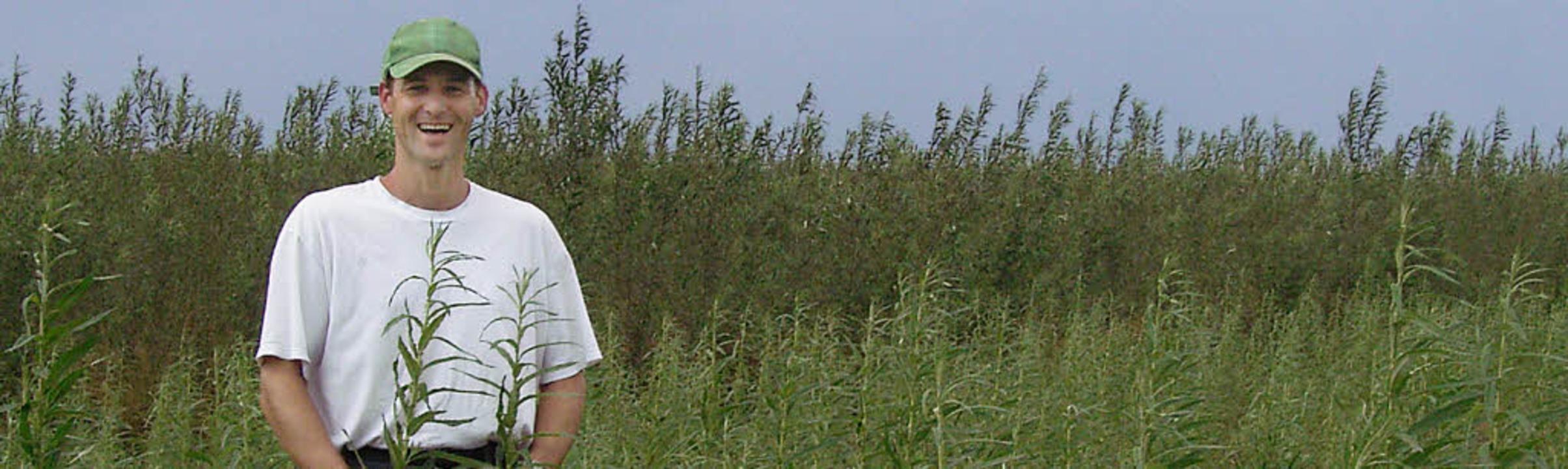 Weiden auf dem Acker: Rainer Weber in ...rstmals für seine Hackschnitzelanlage.    Foto: simone höhl