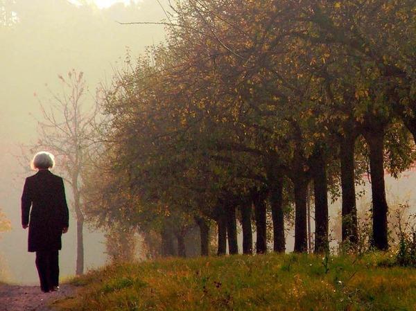 Tipp 1: Raus in die Natur.  UV-Strahlung sorgt dafür, dass unser Körper das Glückshormon Serotonin bildet. Nutzen Sie daher jede Gelegenheit für einen Spaziergang, am besten im Herbstwald.