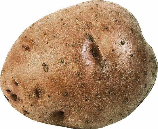 cilena kartoffel