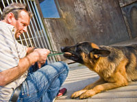 Polizei sucht Hohberger Hundediebe