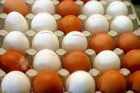 Im Supermarkt werden deutsche Eier knapp