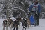 Fotos: Schlittenhunderennen Todtmoos 2010