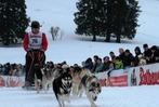 Fotos: Schlittenhunderennen in Bernau