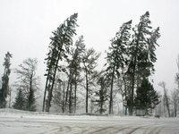 Sturm wütet im Breisgau – ein Mensch stirbt am Feldberg