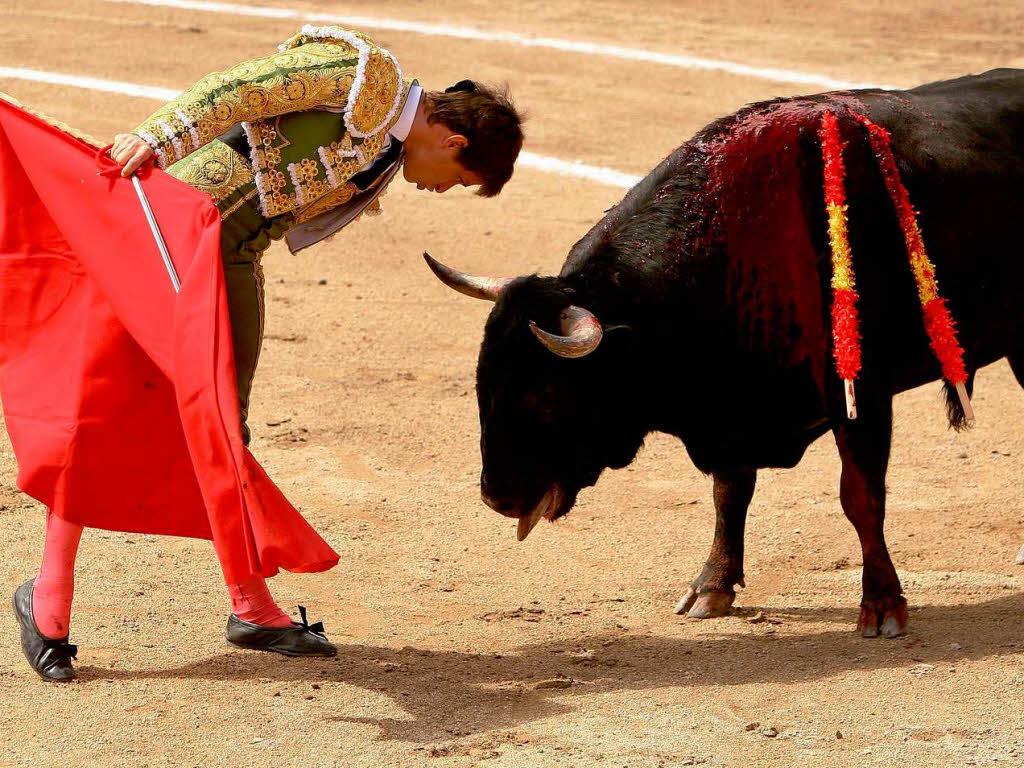 Spanien streitet über Stierkämpfe - Panorama - Badische Zeitung