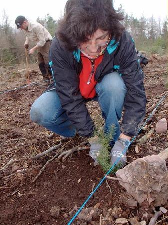 Rund drei Dutzend Freiwillige packten bei der B�rgerpflanzaktion am Samstag im Herbolzheimer Wald mit an.