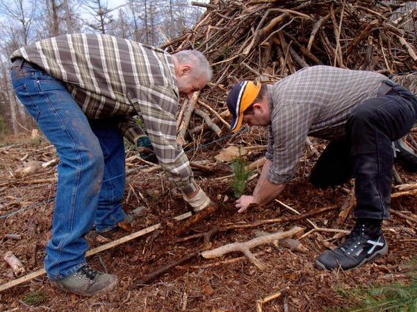 Rund drei Dutzend Freiwillige packten bei der Bürgerpflanzaktion am Samstag im Herbolzheimer Wald mit an.