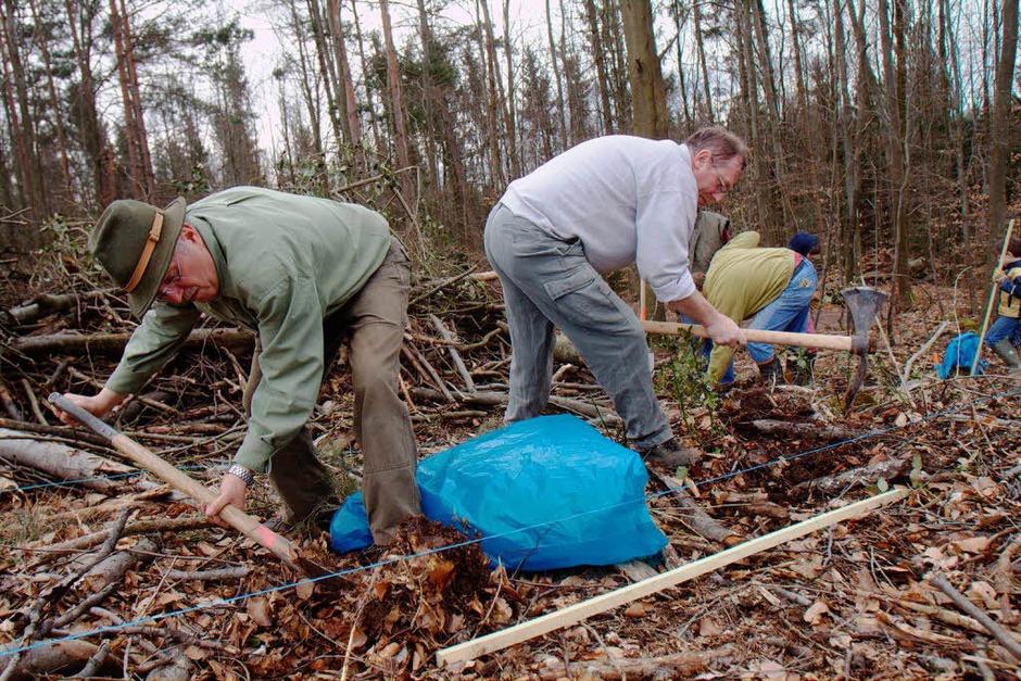Rund drei Dutzend Freiwillige packten bei der Bürgerpflanzaktion am Samstag im Herbolzheimer Wald mit an. (Foto: Patrik Müller)