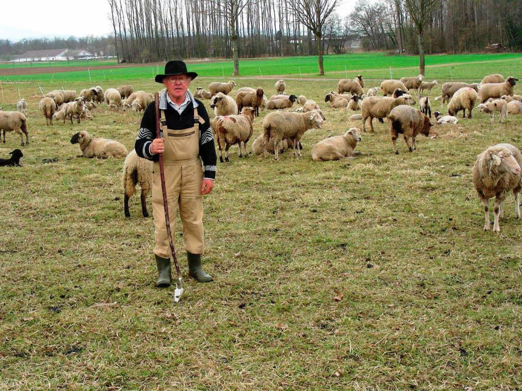 Herde  Zu Tode gehetzte Herde: Schäfer fürchtet um seine Existenz - March ...