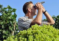 Winzerkeller Breisach: Ärger um Premiumwein für Discounter