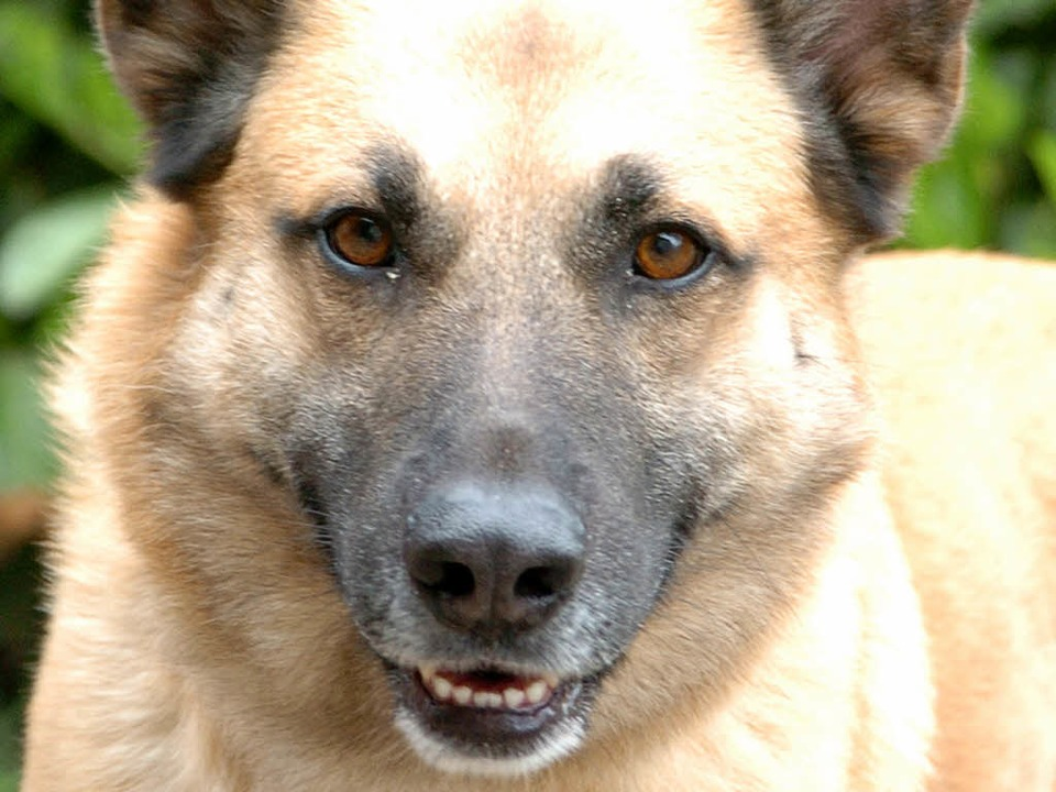 Ein Schäferhund fraß den Köder und verendete innerhalb von wenigen Stunden.  | Foto: Michael Bamberger