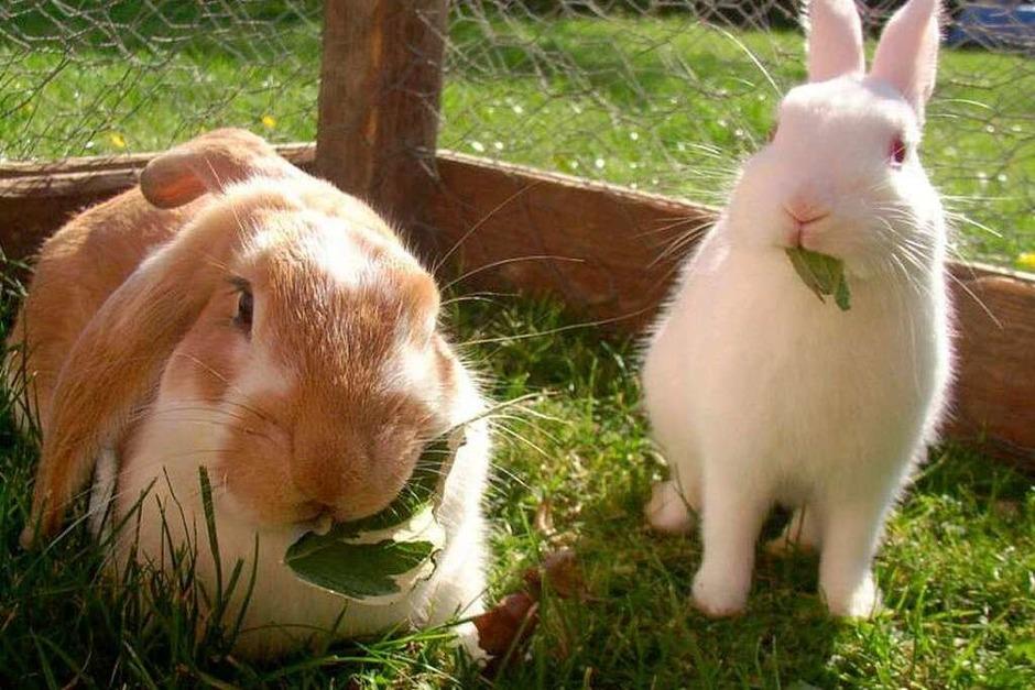 Kaninchen sollten nicht nur im Freigehege immer ein schattiges Plätzchen haben, um der Sonne ausweichen zu können. (Foto: Privat)