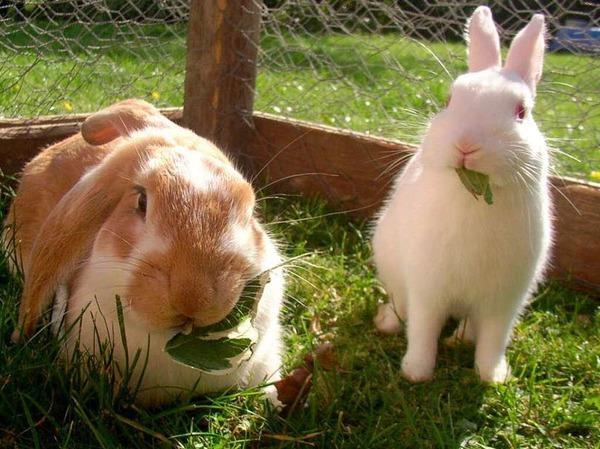 Kaninchen sollten nicht nur im Freigehege immer ein schattiges Pl�tzchen haben, um der Sonne ausweichen zu k�nnen.