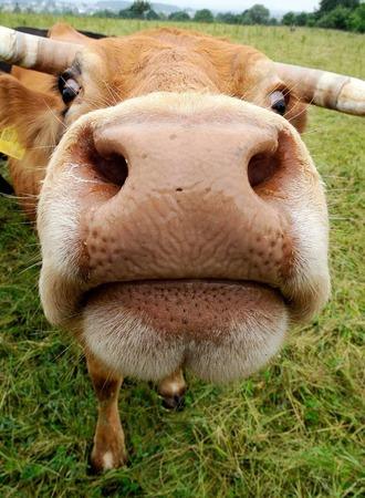 Kühe und andere Weidetiere brauchen im Sommer einen schattigen Unterstand.