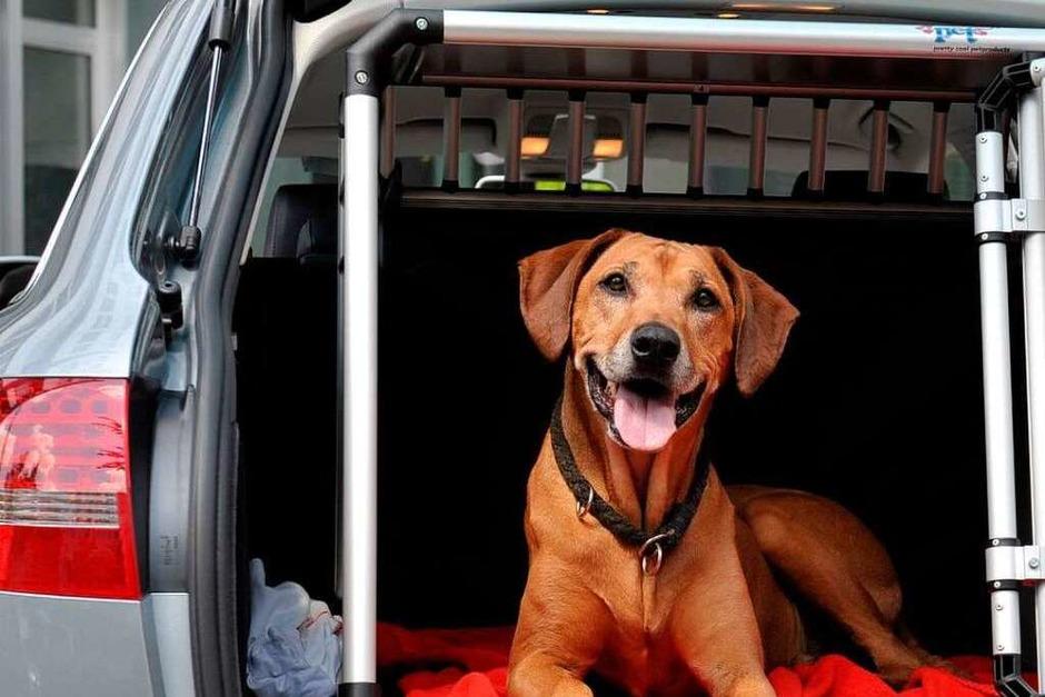 Hunde und Tiere allgemein sollten an heißen Tagen in keinem Fall im Auto zurückgelassen werden. (Foto: dpa)