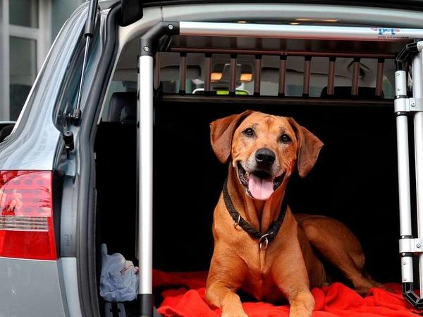 Hunde und Tiere allgemein sollten an heißen Tagen in keinem Fall im Auto zurückgelassen werden.