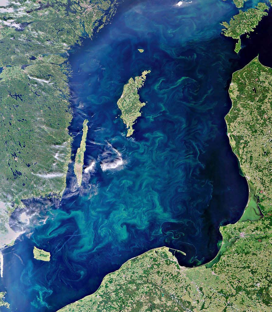 Panorama Riesiger Teppich aus Blaualgen in der Ostsee