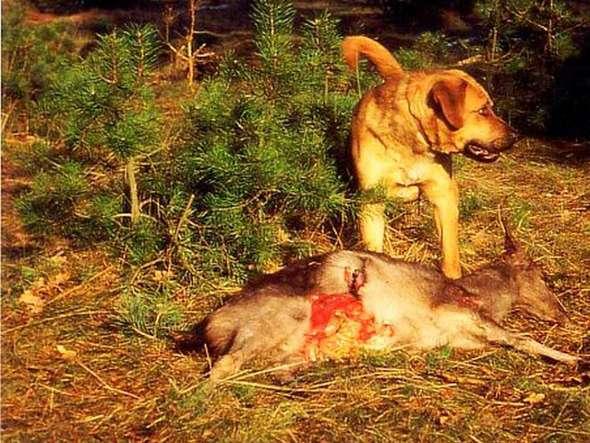 ... Hunde im Wald – für andere Tiere eine Gefahr - badische-zeitung.de