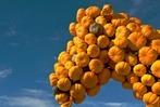 Fotos: Farben des Herbstes - K�rbis-Schau in Hartheim