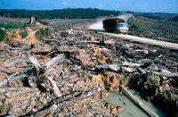 Ecuador lebt vom �l – und nimmt die Abholzung des Regenwalds in Kauf