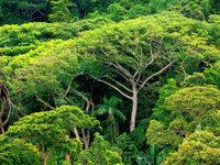 Bedrohte Arten: Wie wertvoll ist die Natur?