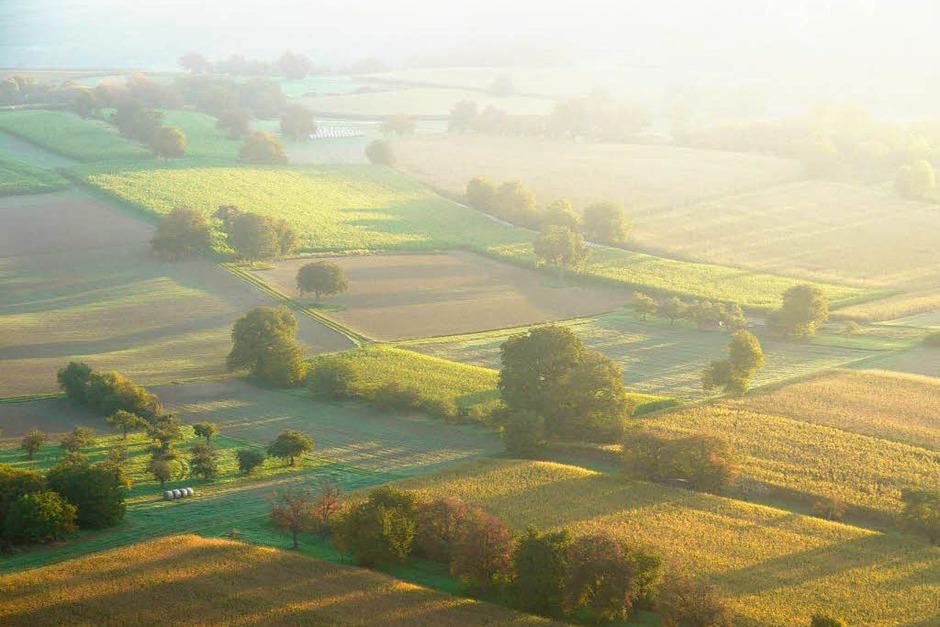 Über den Feldern hält sich der Nebel (Foto: Katharina Meyer)