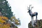 Fotos: Der Höllental-Hirsch ist wieder da!
