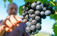 Gault Millau zeichnet badische Weine aus