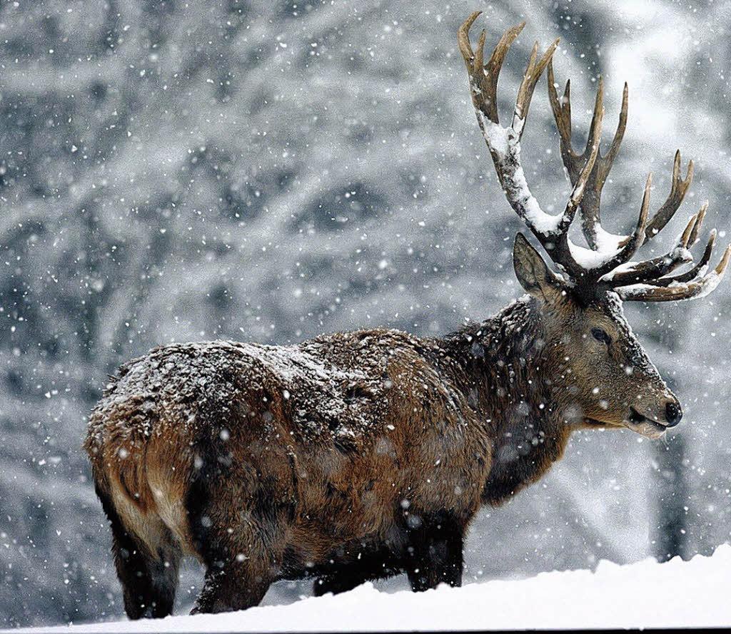 foto tiere im winter