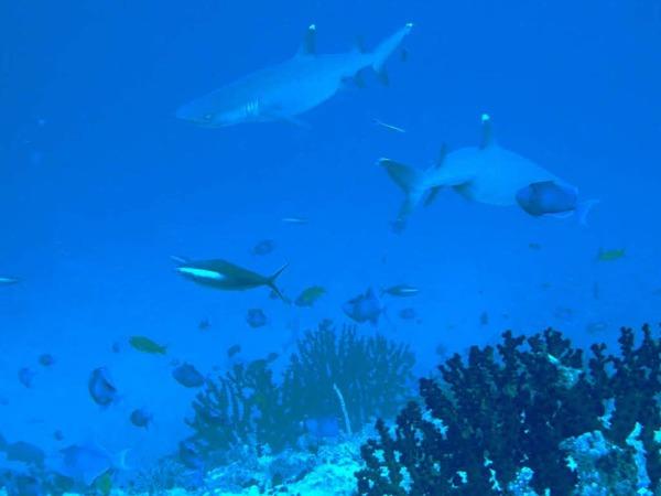 Abtauchen in die Weltmeere: Hier zeigt sich eine faszinierende Vielfalt an Pflanzen und Tieren