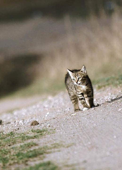 Katzen sind viel unterwegs ? und leider kann ihnen dabei auch einiges passieren    Foto: fotolia.com/Alex Krylov