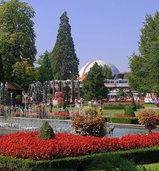 Die Cornus Venus im Europa-Park