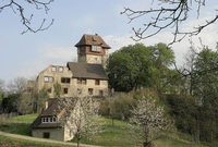 "Gerhart's Strauße bei Jechtingen: ""Spargel satt!"""