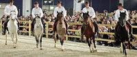 Freiburg bekommt eine eigene Pferdemesse