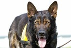 Fotos: Spürhunde der Hundestaffel in Umkirch